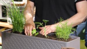 Basiskurs Urban Gardening