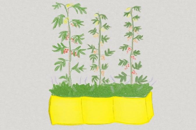 Topfbepflanzung planen